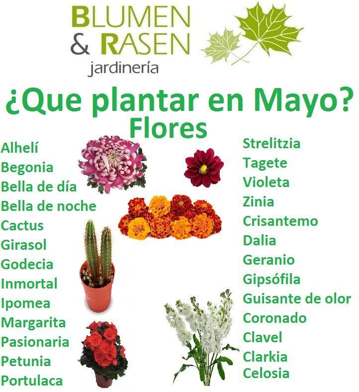 Siembra De Mayo Cactus Plants Plants Cactus