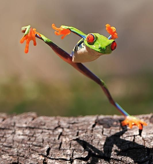 37++ Why do frogs make noise at night information