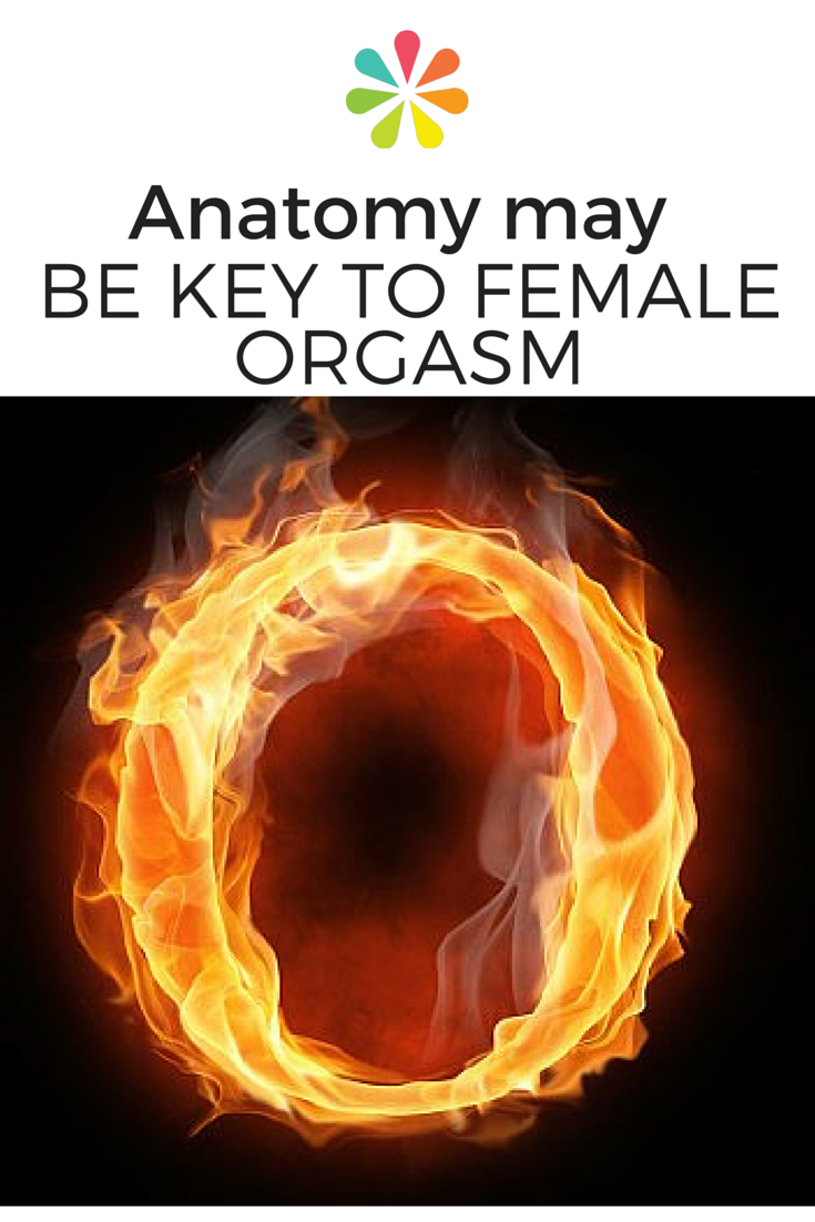 Anatomy May Be Key To Female Orgasm Clinic Healthy Living And
