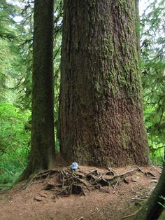 10) Valley of the Giants,Oregon Coast Range in Northwest Oregon If you haven't stood side-by-side with an old growth tree like this, we really urge you to get to Valley of Giants, stat.