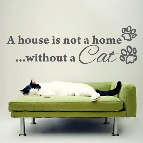 a house is not a home without a cat wall sticker quote available