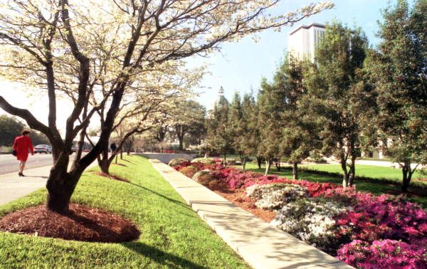 Springtime View Showing Flowers And Dogwood Trees In Bloom On The Grounds Of The Florida State Capitol In Tallahassee Dogwood Trees Tallahassee Landscape Plans