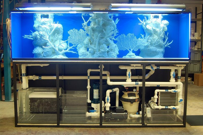 Best aquarium filter a comprehensive guide aquarium for Filters for fish tanks