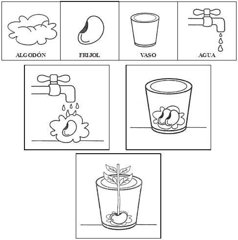 Imagenes Para Colorear De Germinacion De Plantas Ciclos De Vida De Las Plantas Crecimiento De Una Planta Actividades Para Preescolar 3