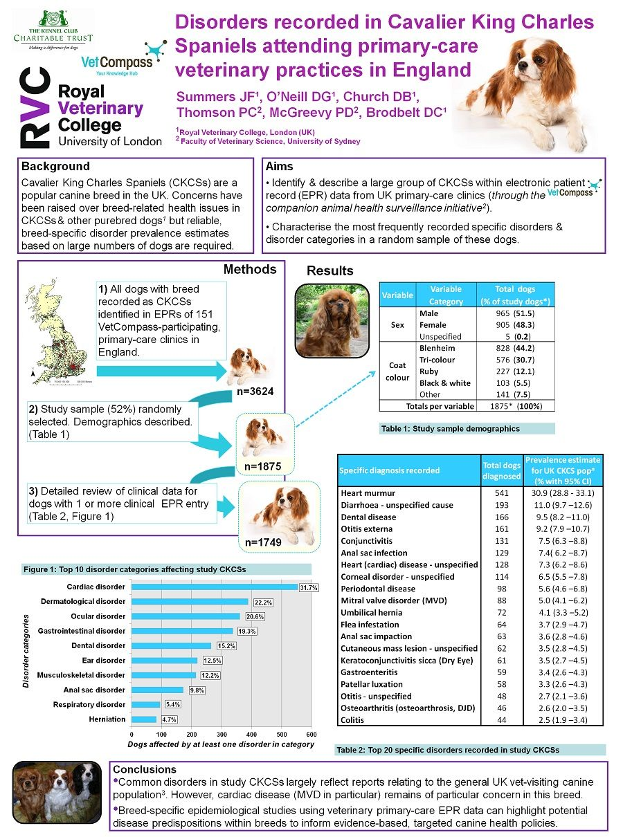 Heart Murmur in Dogs Should You Be Worried? Ear