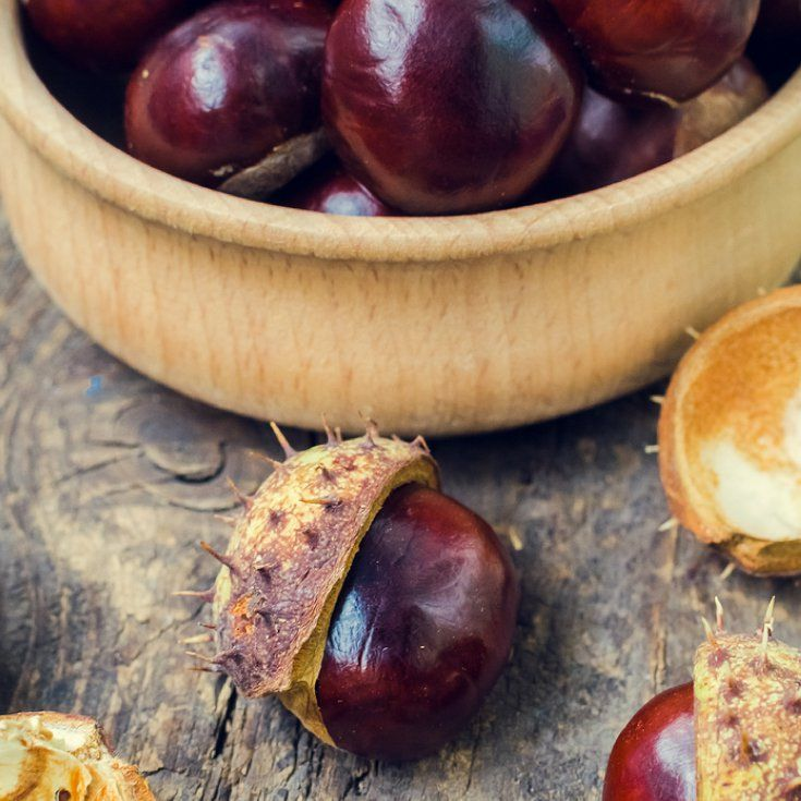 Chestnut Benefits for the Brain, Bones, Heart & More by @draxe