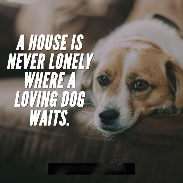 Pin by DogsAdorers on dogs Dog quotes, Puppy love quotes