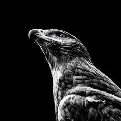 BirdLife Photography