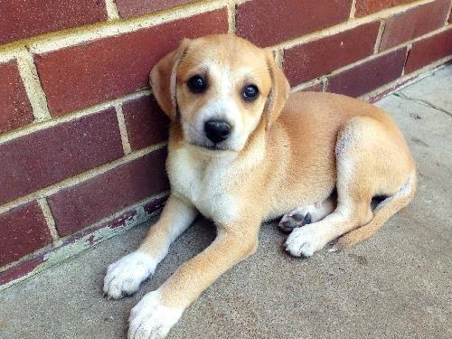Adopt Mason on Adoption, Hound dog, Pet adoption