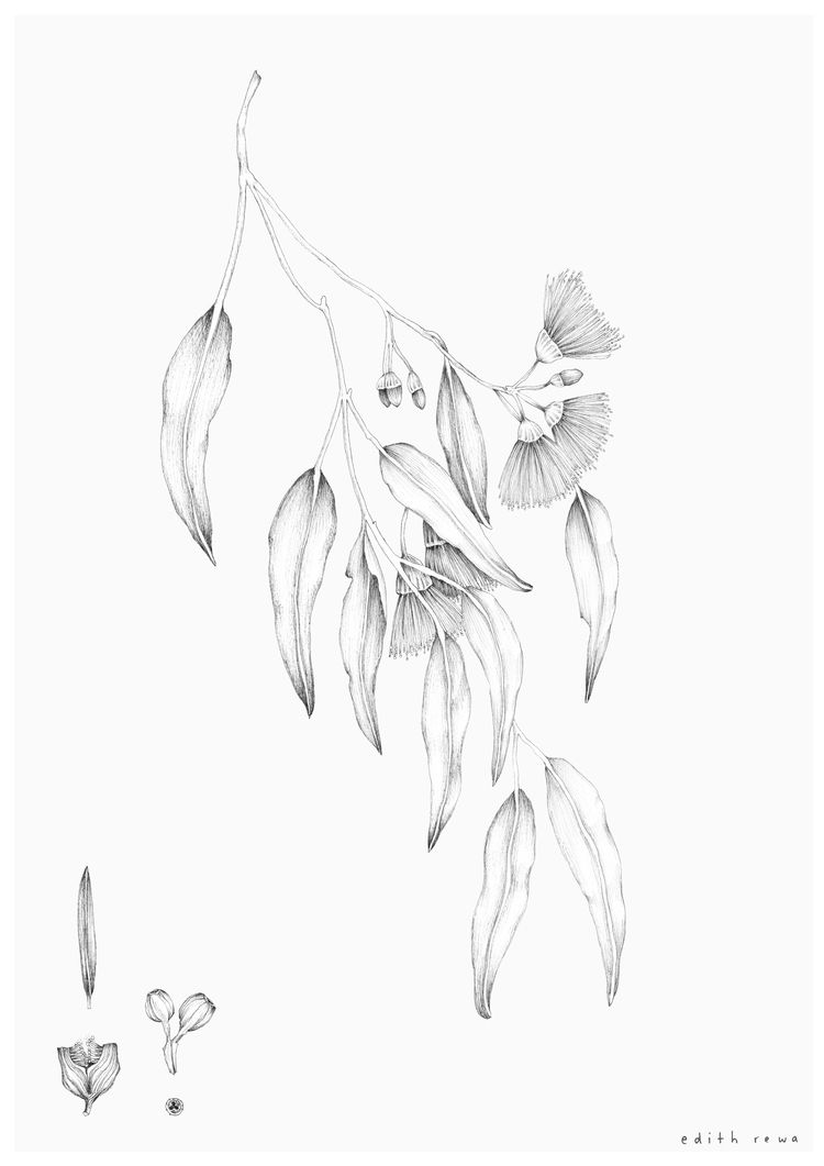 Eucalpyt solo a3 white 2jpg native tattoos flower