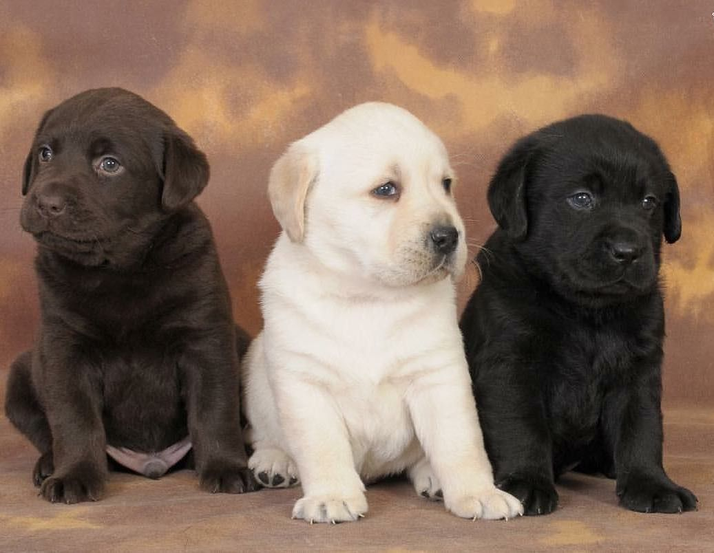 Dog Dogs Puppy Pup Cute Eyes Instagood Dogs Of Instagram