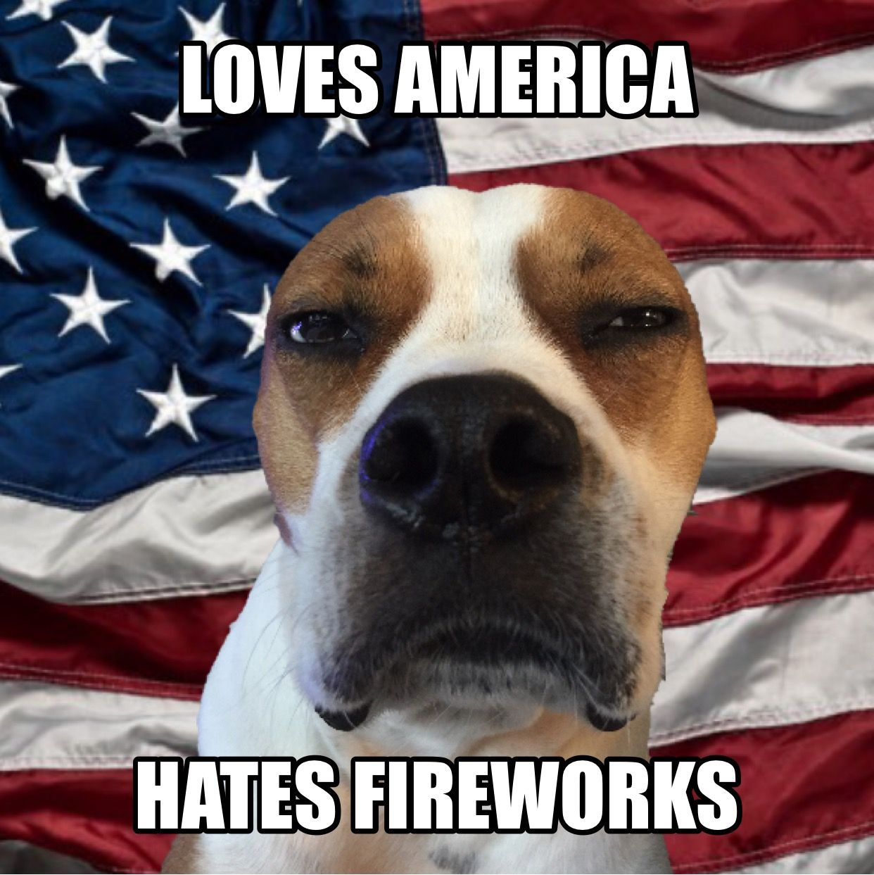 Can T We Just Celebrate With Cake Loves America Hates Fireworks Chewiesteve Adoptdontshop Chewslife Dogs And Fireworks Pitbull Dog Dog Memes
