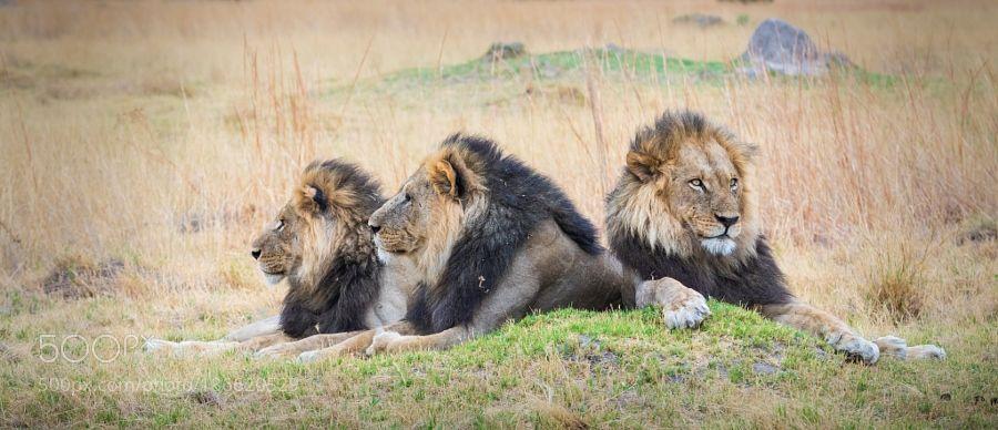 Three Kings by eetschman via http://ift.tt/2gZbzWi