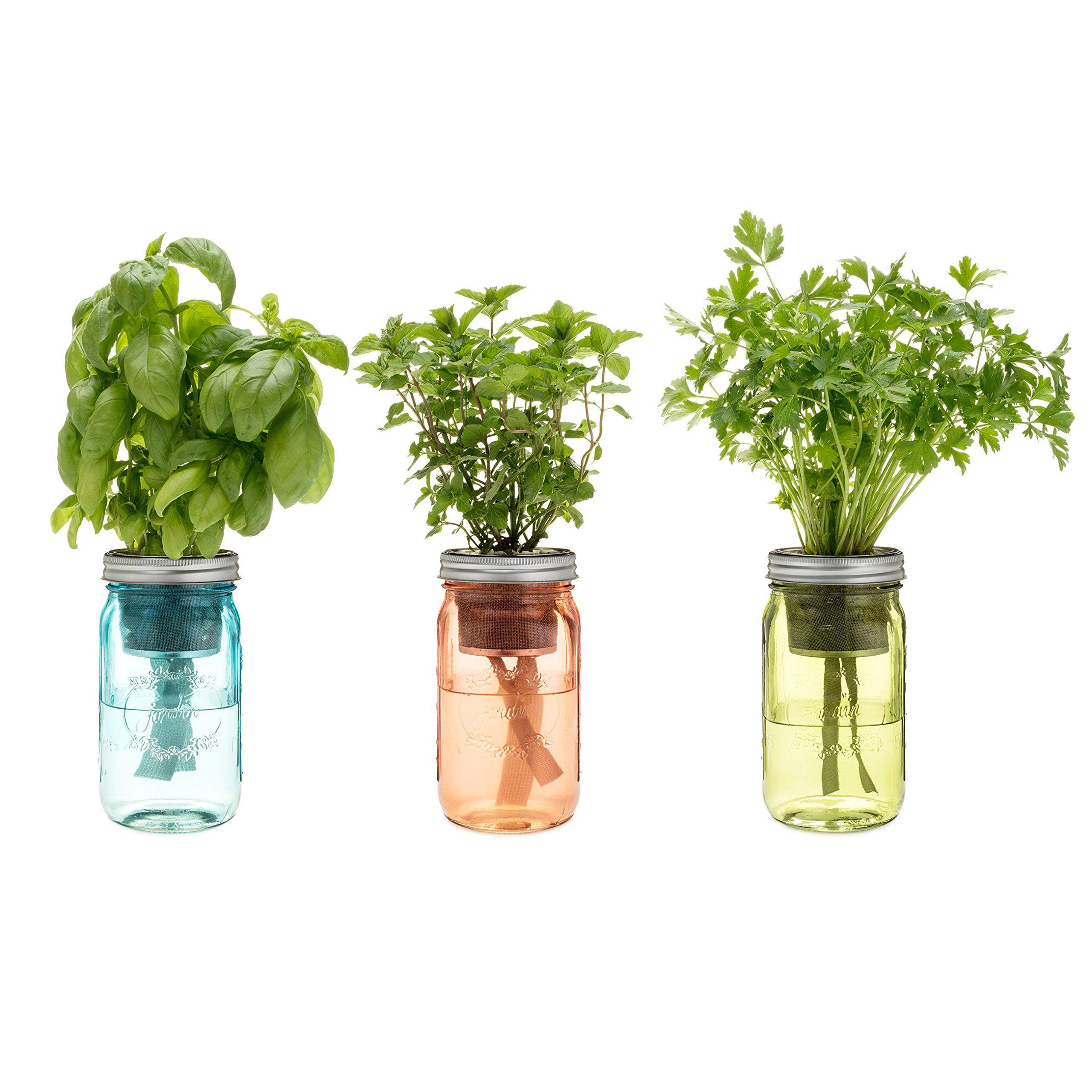 Amazon Com Kitchen Herb Kit Three Self Watering Indoor 400 x 300