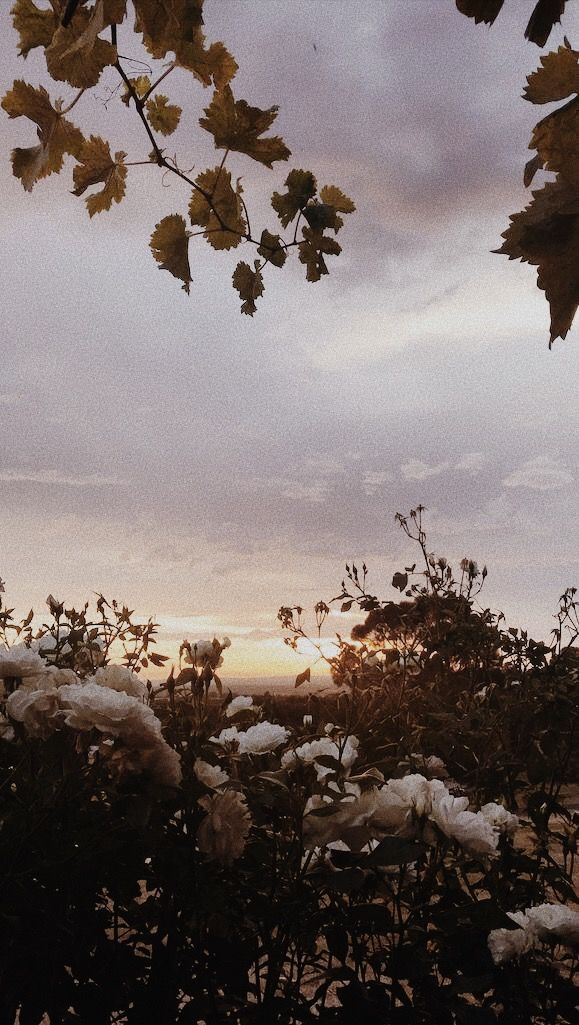 Summer Sunsets Flowers Love Resimler Resim Duvari Manzara