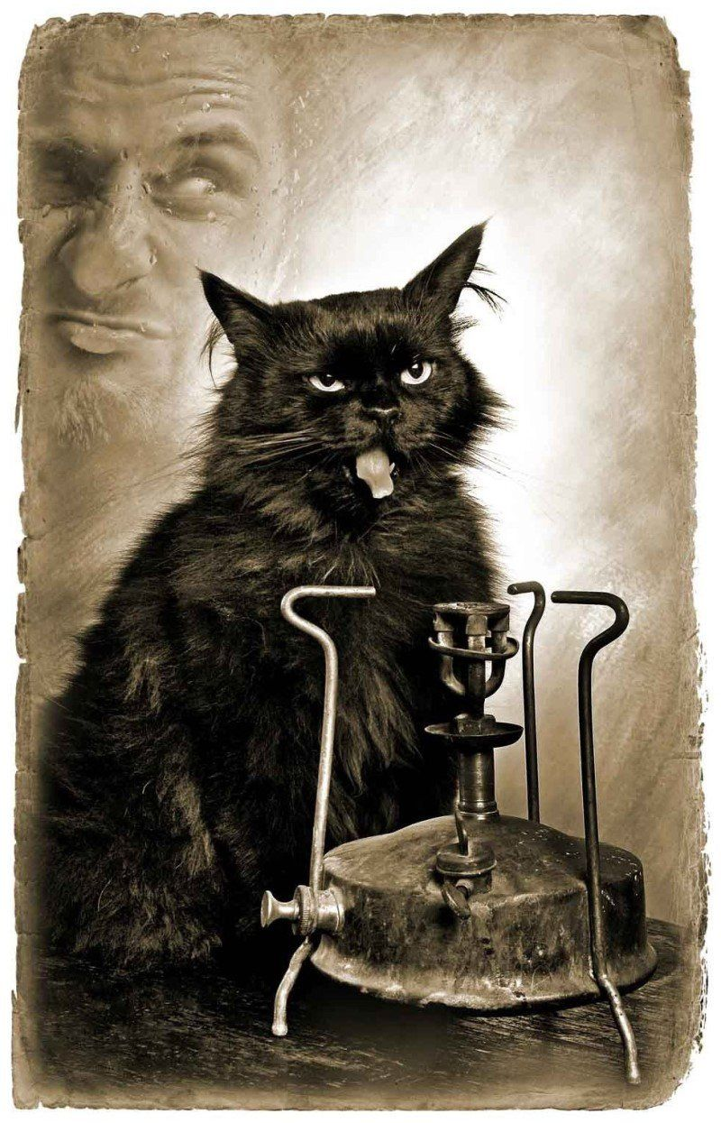 Мастер маргарита цитаты кота бегемота