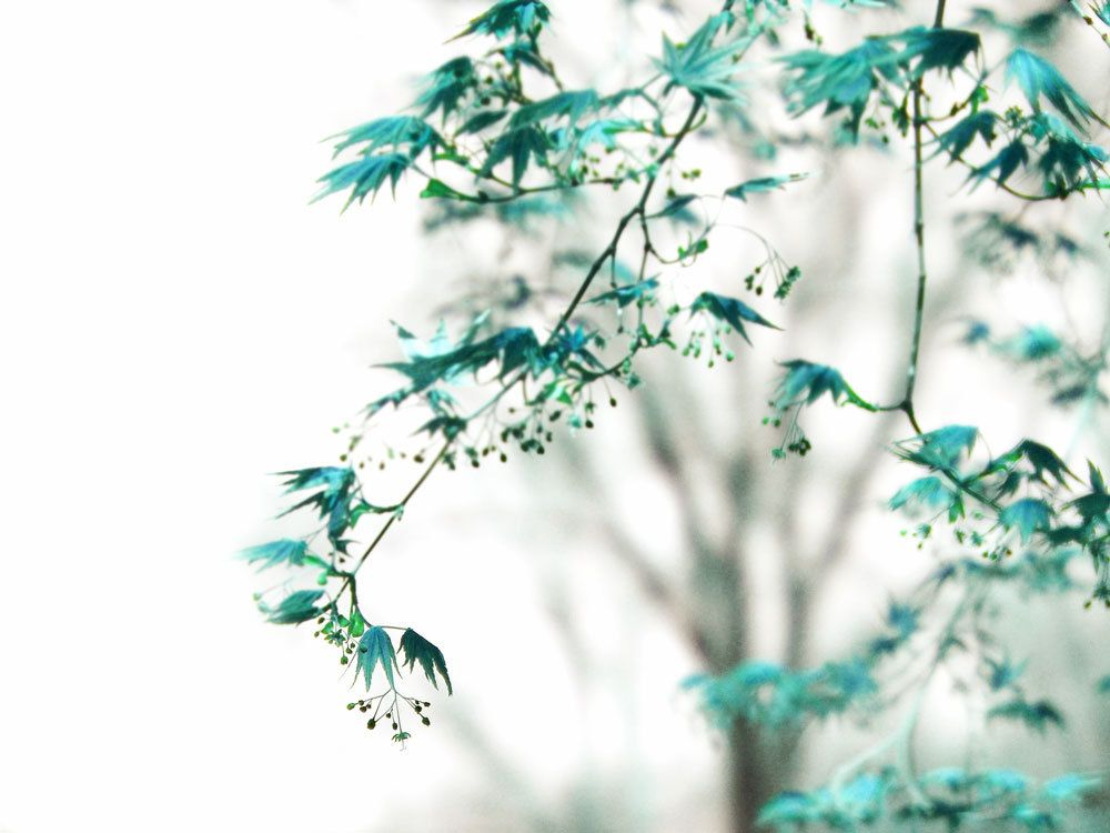 Image result for turquoise tree