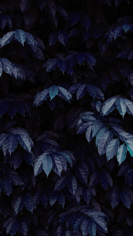 Beautiful Image By Chuttersnap Dark Blue Wallpaper Phone Wallpaper Images Leaf Wallpaper