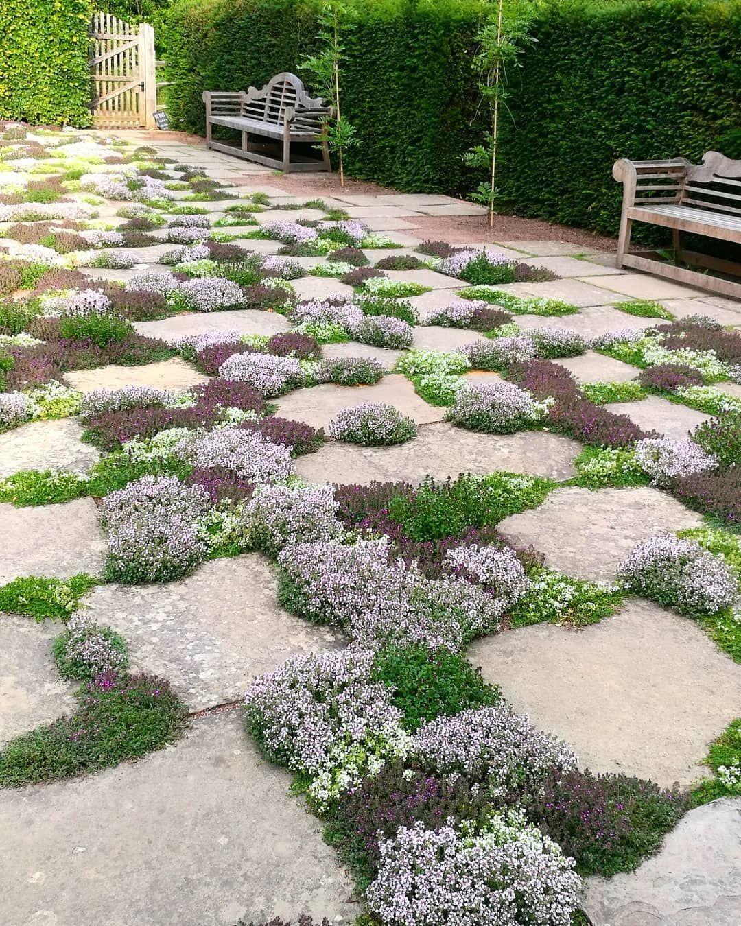 Meryl Lakin On Instagram The Thyme Lawn Sissinghurst Thyme Thymelawn Sissinghurst Sissinghurstca Cottage Garden Garden Planning Garden Design