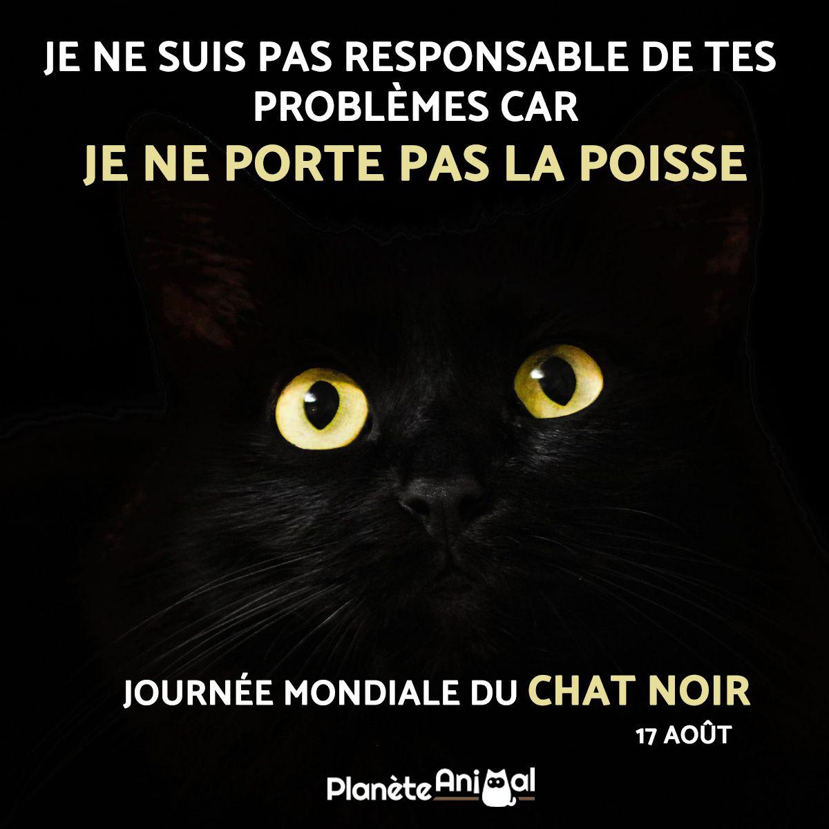 Quelles Sont Les Caracteristiques Des Chats Noirs Chats