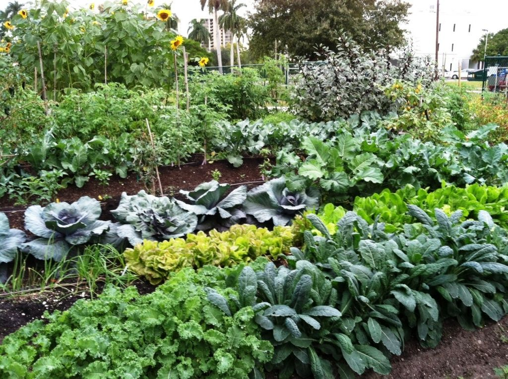 Merveilleux Florida Couple Sues City After Being Forced To Remove Family Vegetable  Garden