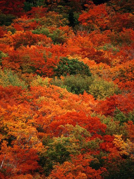 Autumn Foliage, Nova Scotia|An elevated view captures autumn foliage at Cape Breton Highlands National Park in Nova Scotia, Canada.