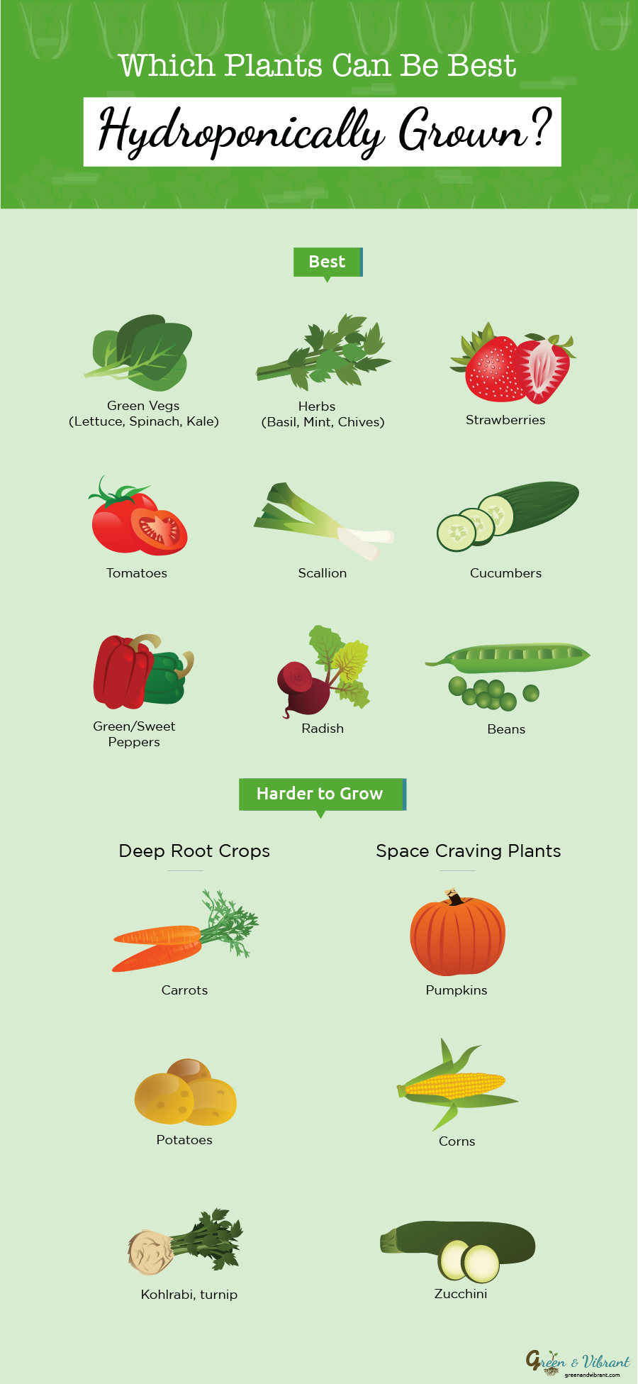 13 Best Easiest Plants (Vegetables, Herbs, and Fruits