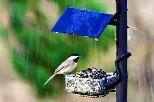Pin By گلان On Alone Wild Birds Unlimited Wild Birds Rain Wallpapers