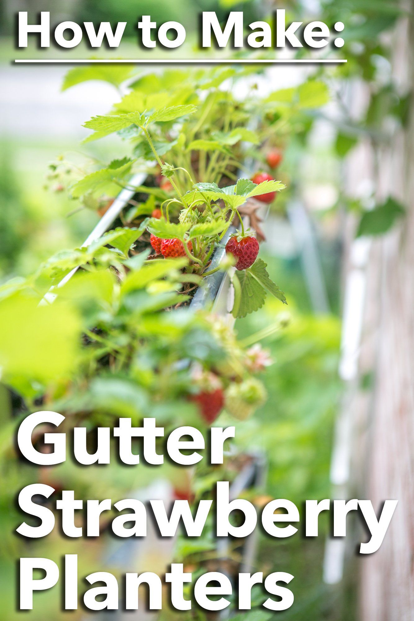 How to make Gutter Planters for Strawberries - Primal Palate | Paleo Recipes