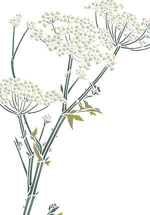 hogweed/cow parsley
