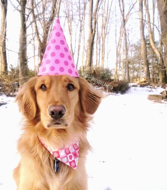 Awh Happy Birthday Cute Cats Dogs Animal Birthday Dog Birthday