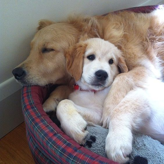 Cute Animals By Amanda Bush On Cuteness Overload Cute Dogs Dog Love