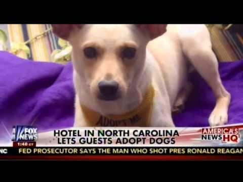 Aloft Asheville Downtown Asheville North Carolina Free Of Dog Fees Dog Adoption Dog Friendly Hotels Dog Friends