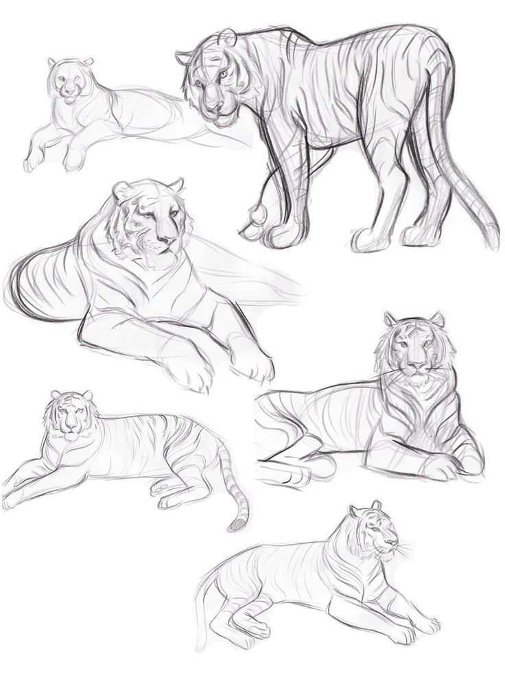 Pin By Patricia Jimenez D Luna On Monica In 2020 Animal Sketches Animal Drawings Sketches