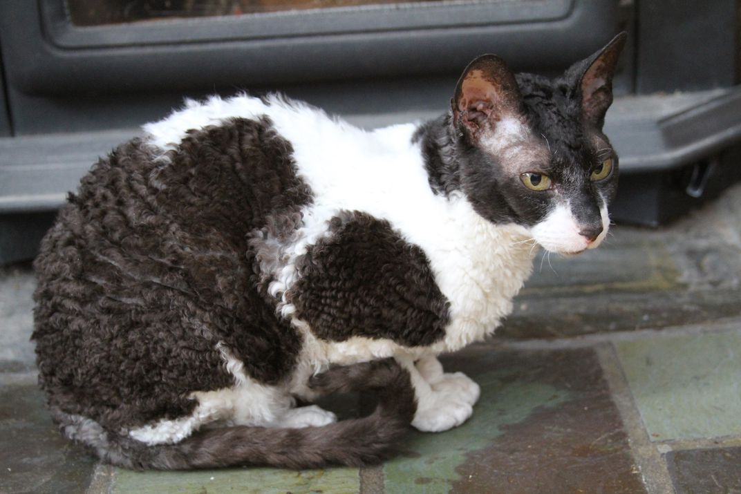 There S No Such Thing As A Hypoallergenic Cat Hypoallergenic Cats Cats Cats For Sale