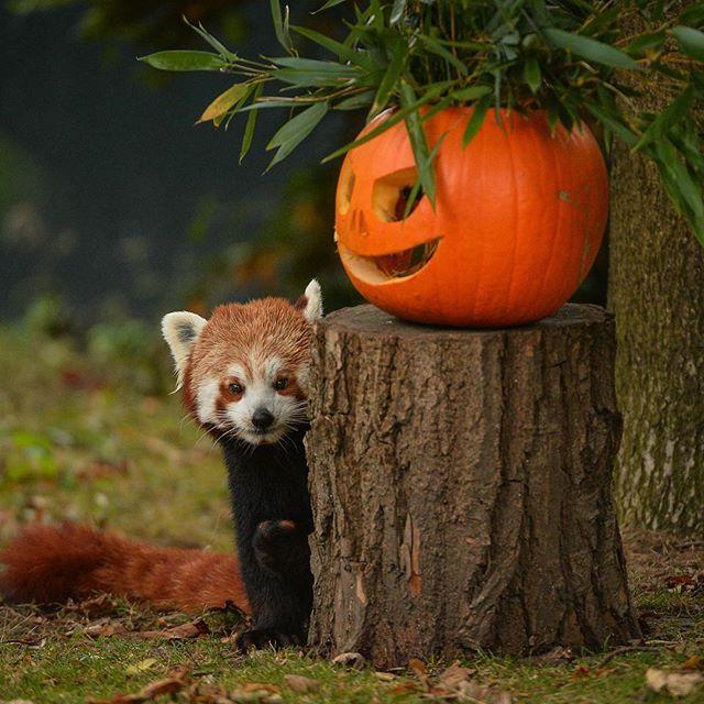 Happy Halloween weekend! #pumpkins #halloween #halfterm