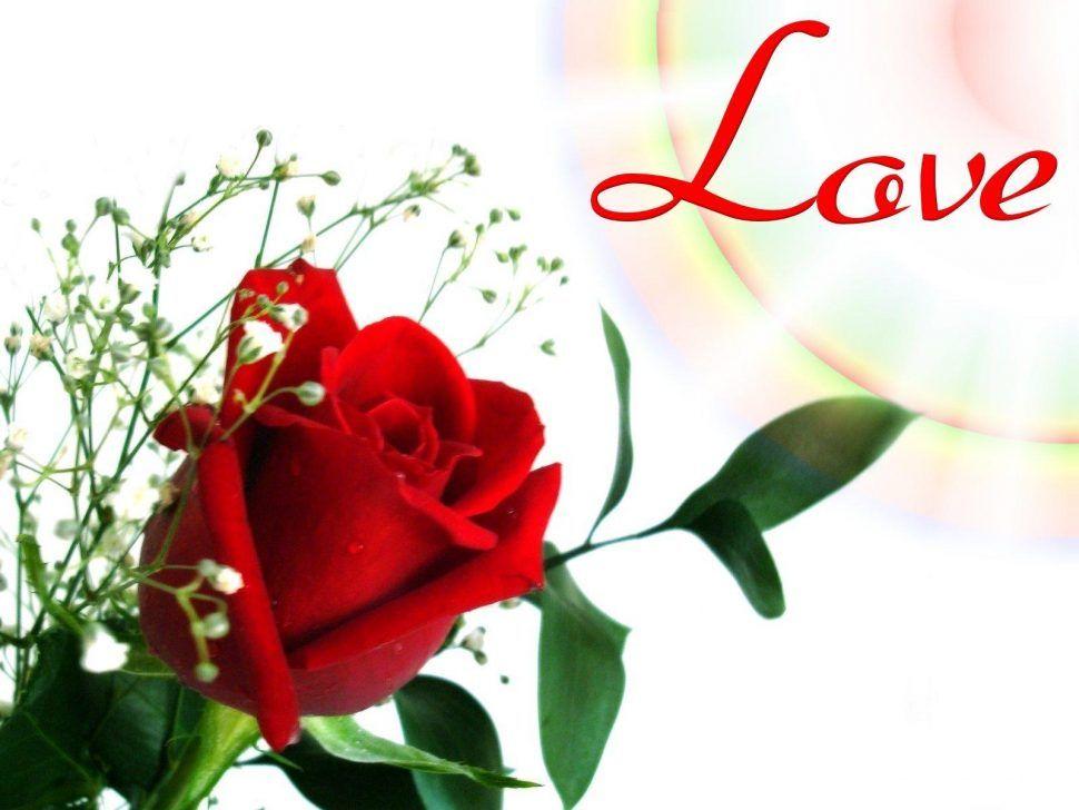 Pin By Milon Nath On Adobe Photoshop Pinterest Rose Flower