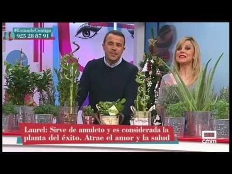 9 Plantas Para Atraer El Dinero La Prosperidad Y El Amor Cuál Vas A Elegir Youtube Planta De La Suerte Planta De Lavanda Jardín De Jardinería