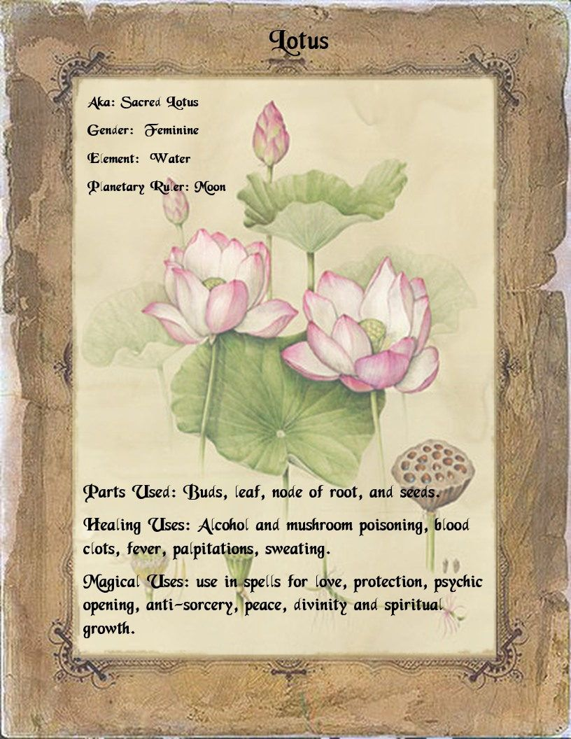 Pin By Kazancauldron On Herbal Grimoire Pinterest