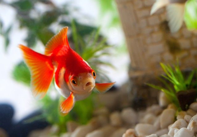 10 False Animal Facts Most People Think Are True Low Maintenance