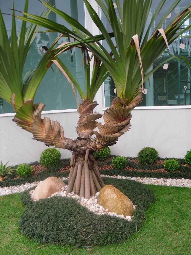 jardins com pandanus - Pesquisa Google   Paisagismo   Pinterest ...