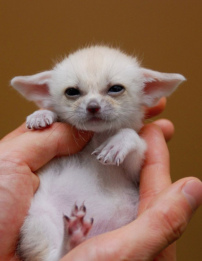 Adorable Tiny Animals With Helpful Descriptions World Info - 32 adorable animals
