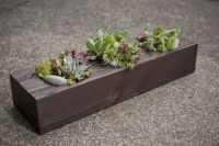 succulent/ up-cycled reclaimed beam