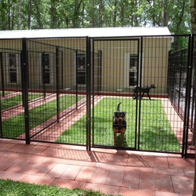 Large Dog Breeding Facilities