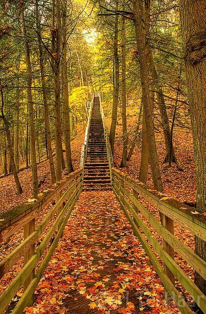 Forest Stairs, Michigan