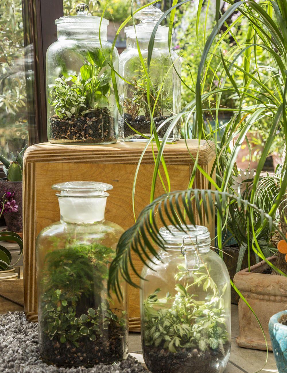Flaschengarten Kleines Okosystem Im Glas Flaschengarten Pflanzen Dekor Pflanzenlampe
