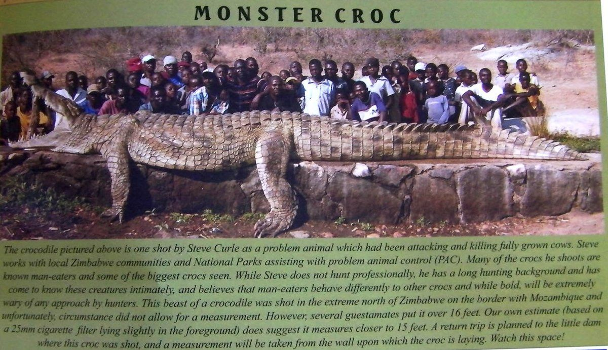 Largest Crocodile Ever Recorded Beautiful Animals Safaris The - Meet worlds largest crocodile caught philippines