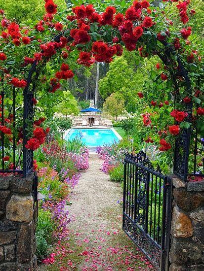 Rosas rojas trepadores - entrada encantadora   BELLOS JARDINES DE ...