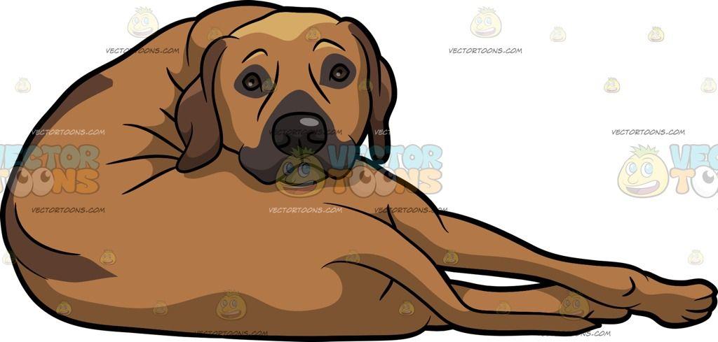 A Lazy Rhodesian Ridgeback Dog Rhodesian Ridgeback Dog Ridgeback Dog Dog Sketch
