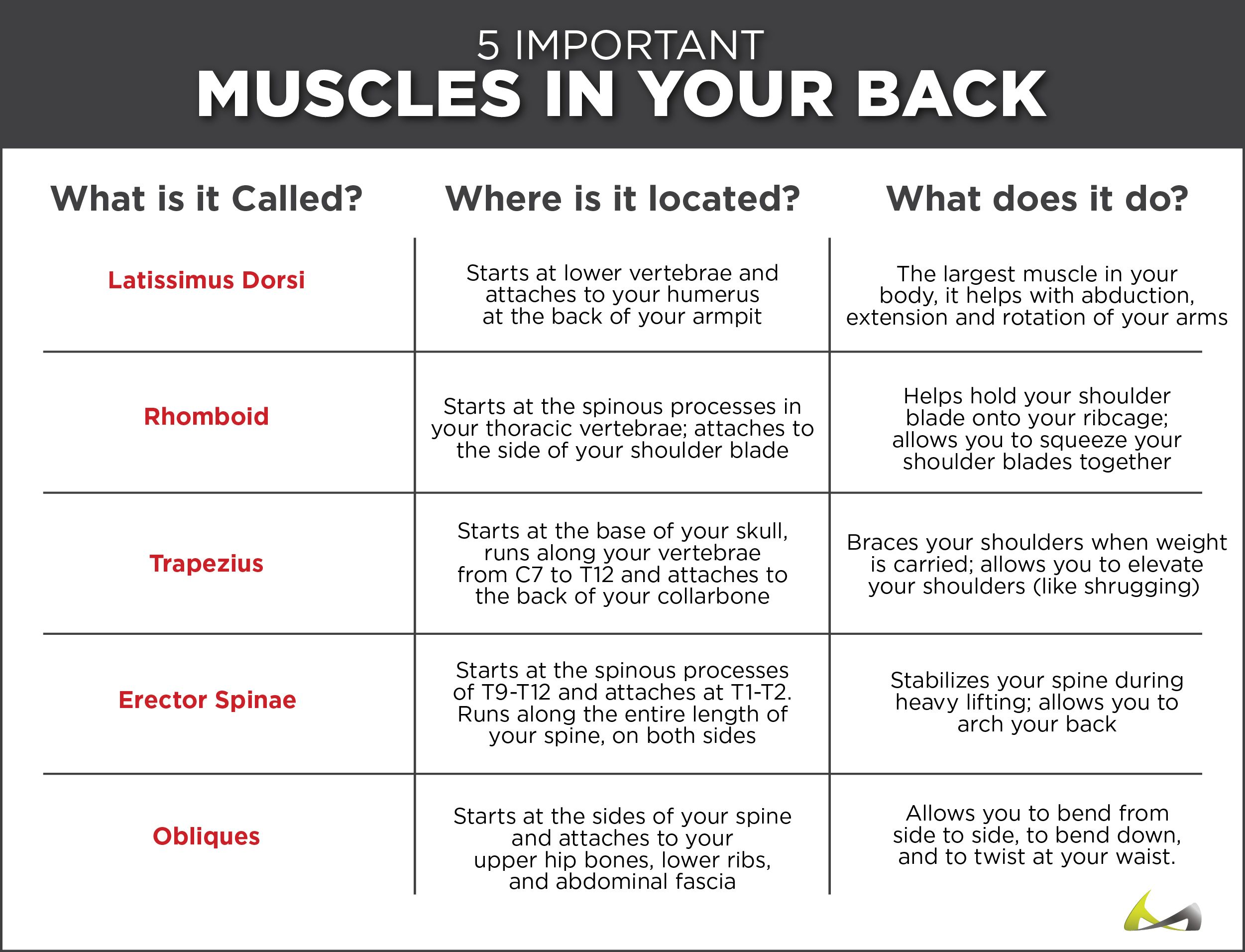 Back Muscle Tear Pull Or Strain Back Injuries Spine Disorders